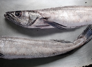 How to cook hake