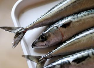 How to cook mackerel