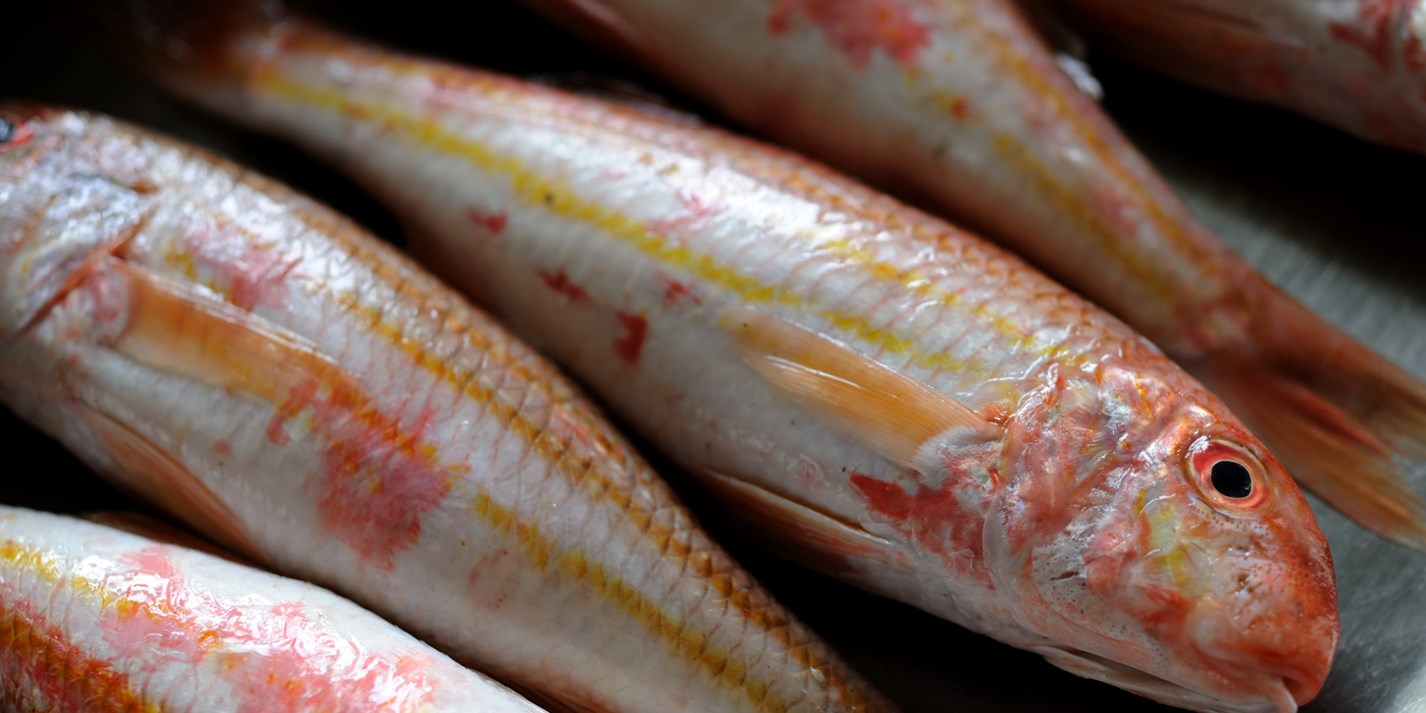 Red Mullet Recipes