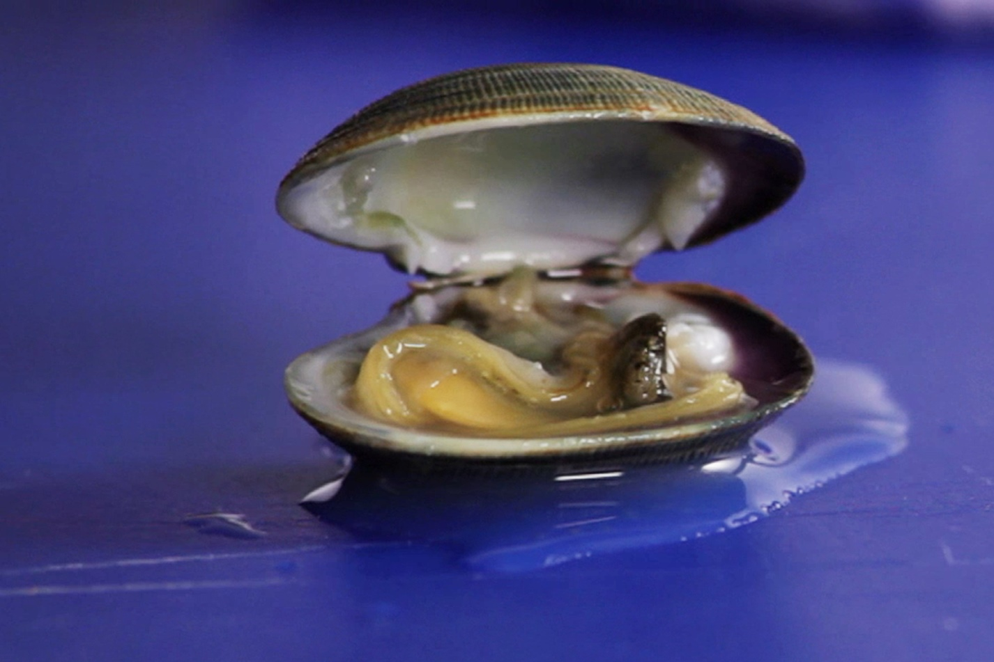 how to cook clams great british chefs how to open a clam