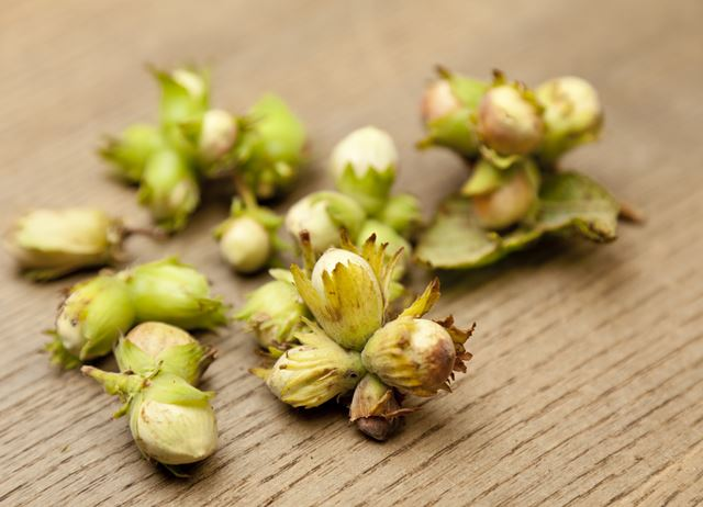 Ingredient focus - cobnuts