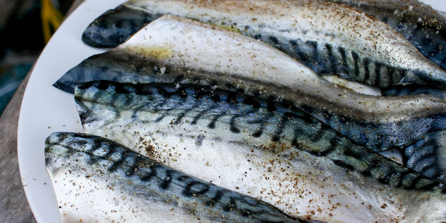 Mackerel fillet recipes