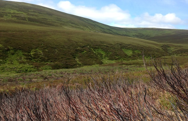Burning the heather to encourage growth