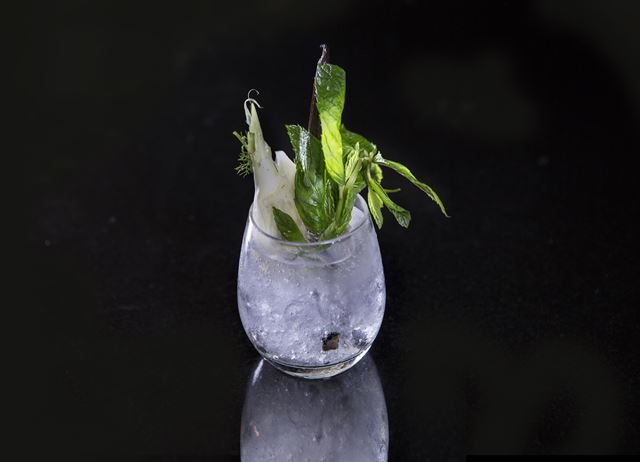 Compressed Fennel gin, vanilla and lemon balm tonic