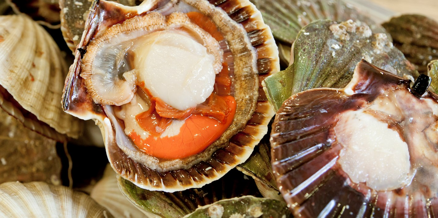 How To Cook Scallops Great British Chefs