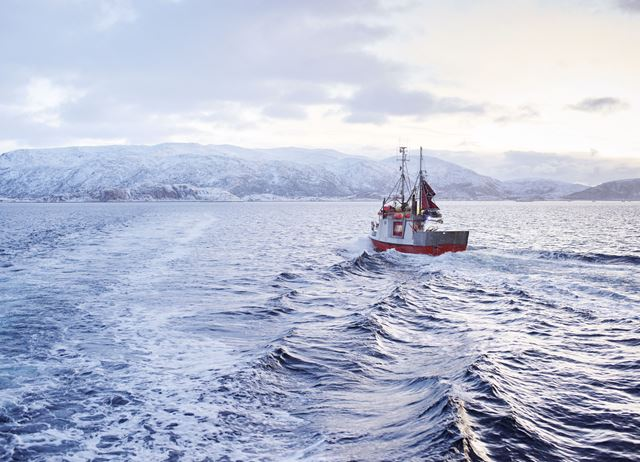 Skrei: in search of the sunshine fish