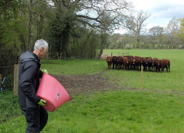 Wagyu in Sussex: on the farm at Trenchmore