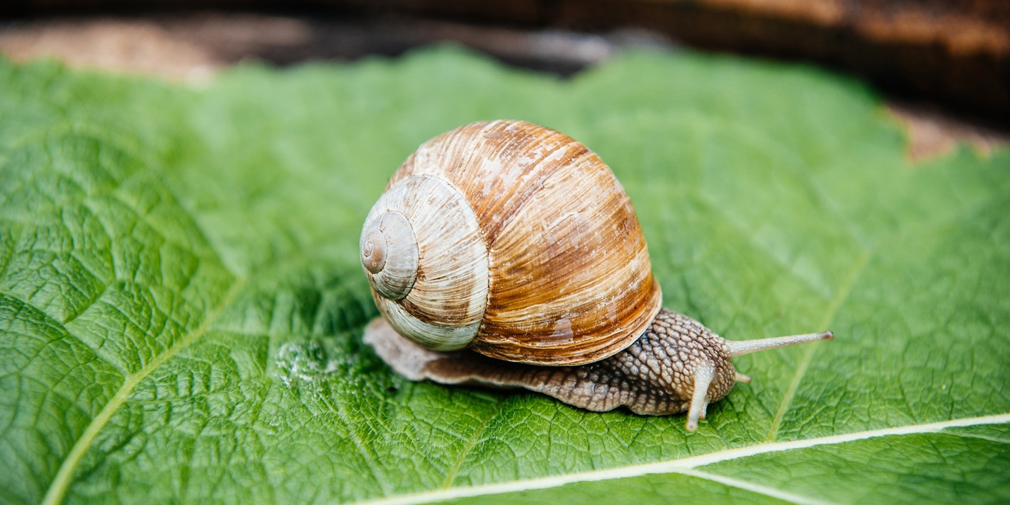 Dorset Snails: putting the gastro in gastropod