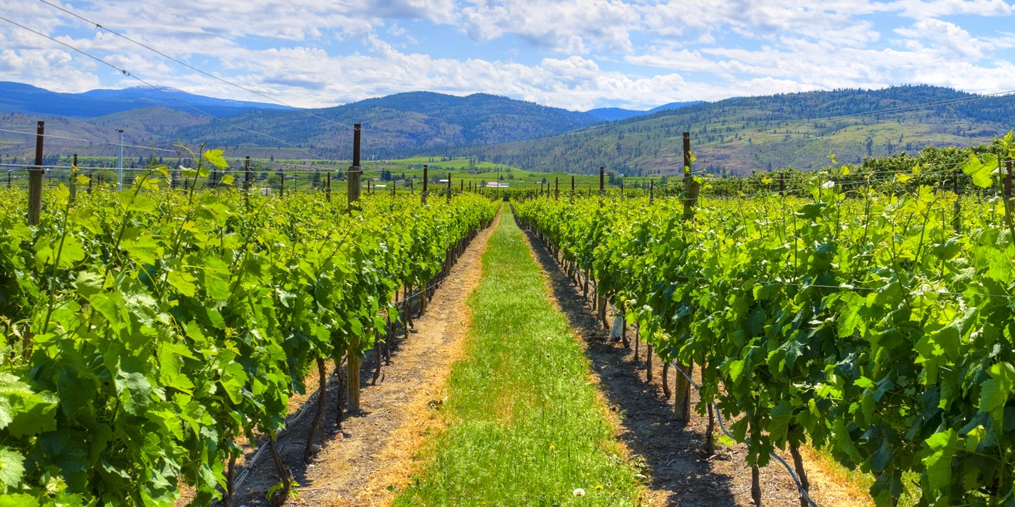 The wines of British Columbia