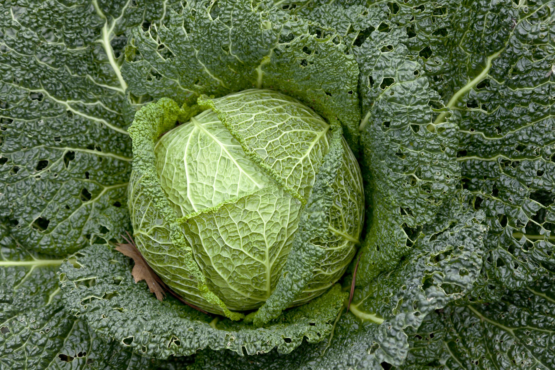 How To Steam Cabbage Great British Chefs