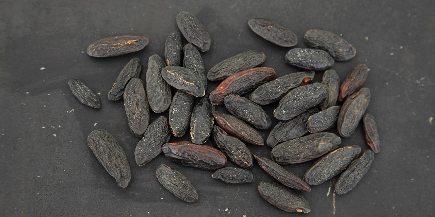 How to cook with tonka beans
