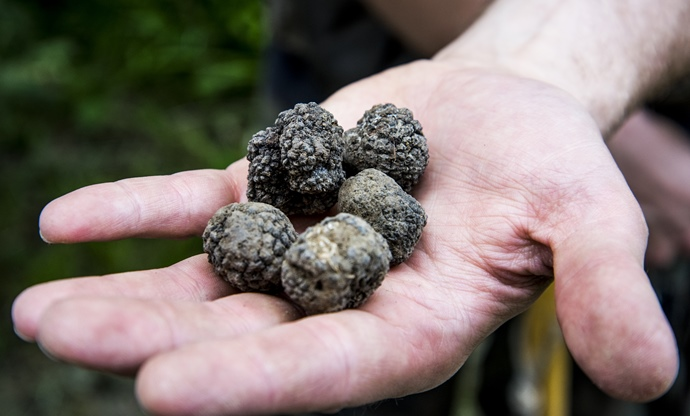 The truffle hunt
