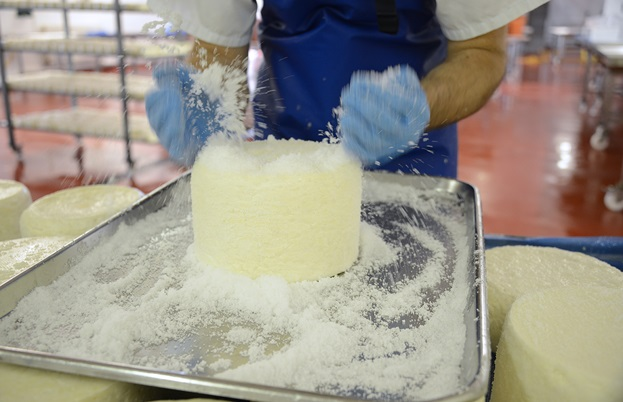 Cheeses being hand salted