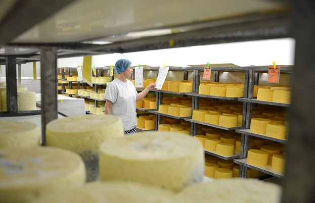 Cheese maturing in the cave