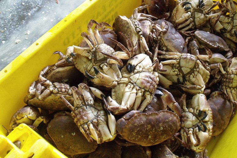 Whitby Crab Company - Great British Chefs
