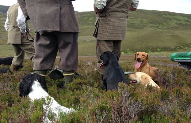 Labradors and spaniels to pick up the birds