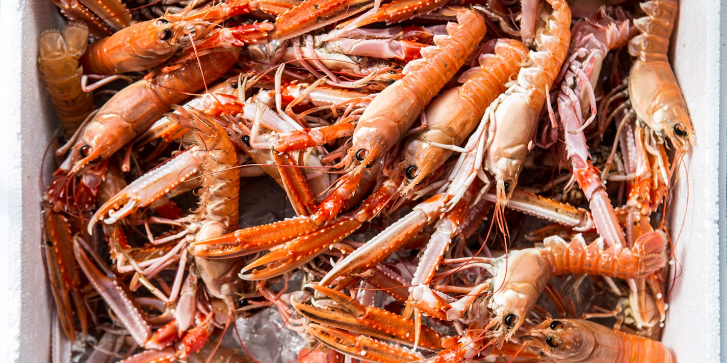 Langoustine Recipes Great Italian Chefs