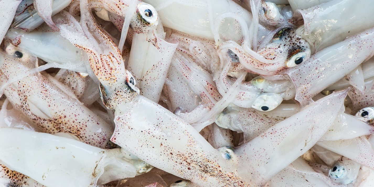 Squid recipes