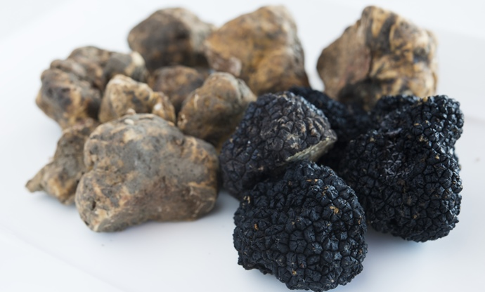 Truffle recipes