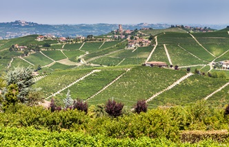 The wines of Piedmont
