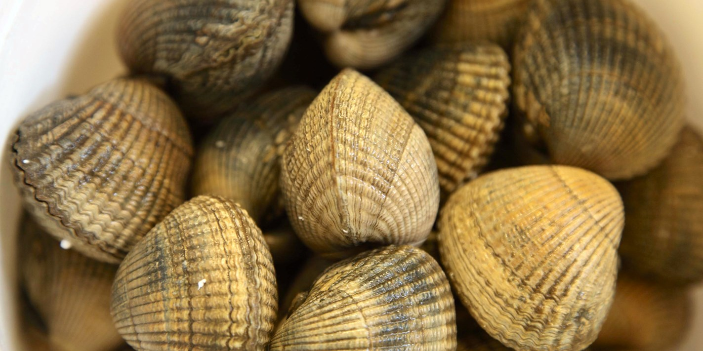 How To Cook Clams Great British Chefs