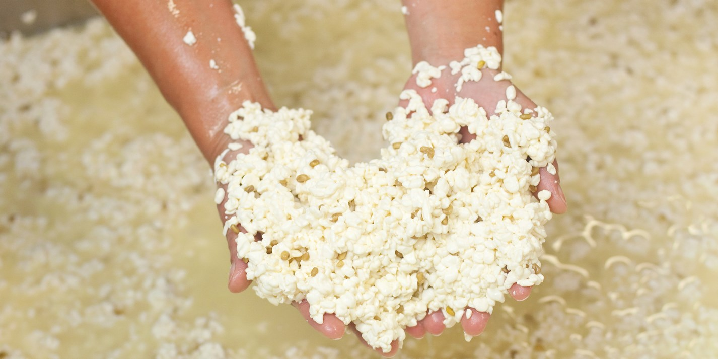 Curds and whey: how cheese is made