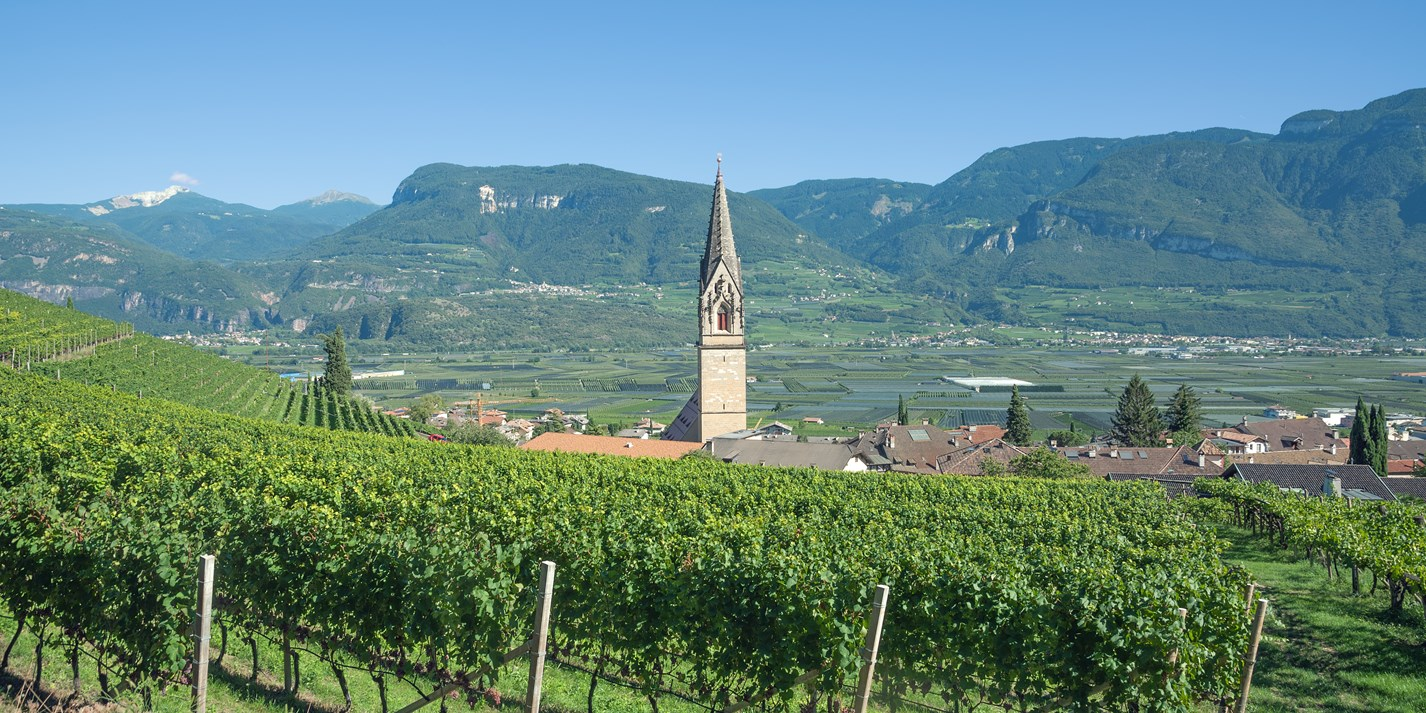 The wines of South Tyrol