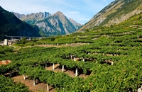 The wines of Valle d'Aosta