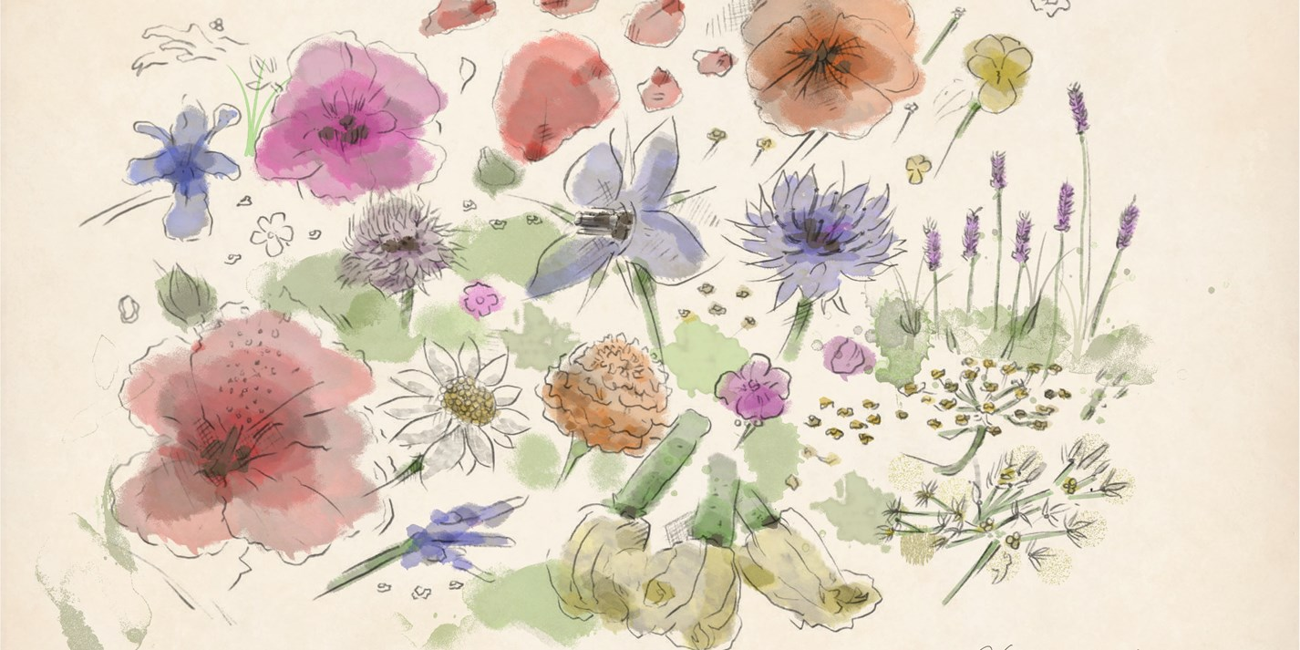 An illustrated guide to edible flowers
