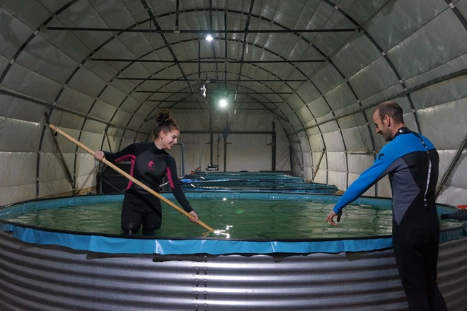 Retire the fish: inside the world's first no-kill caviar farm