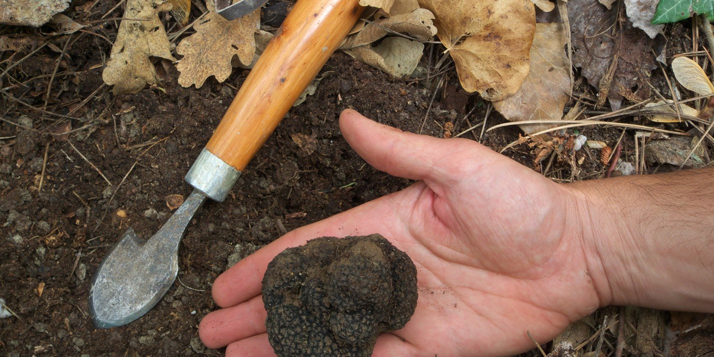 Woodland treasures: the truffles of Umbria