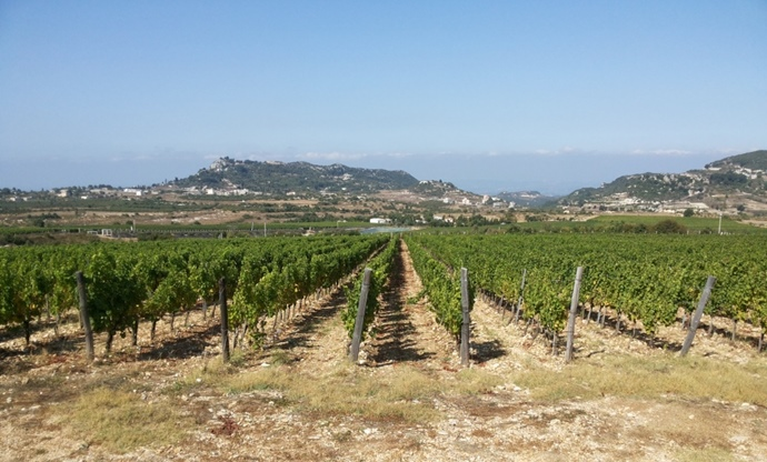 Chateau Bargylus: Syria's vineyard