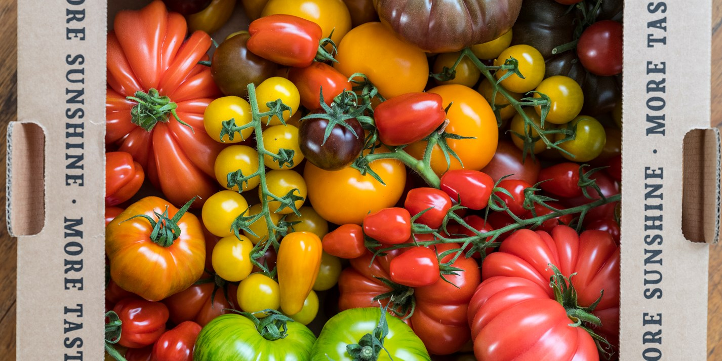 Sunshine fruit: the Isle of Wight's incredible tomatoes