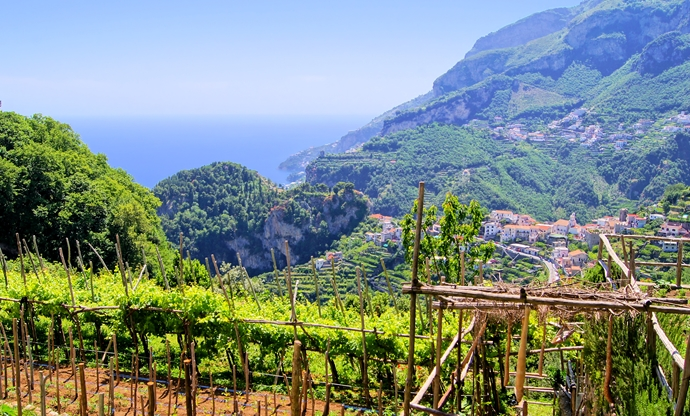 The wines of Campania