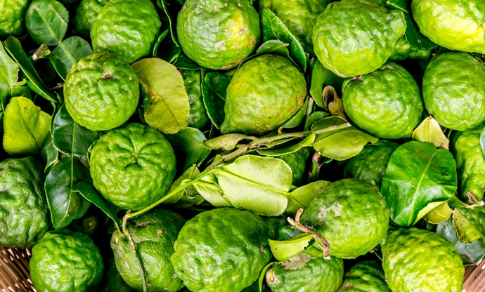 Bergamot: the sweet scent of Calabria