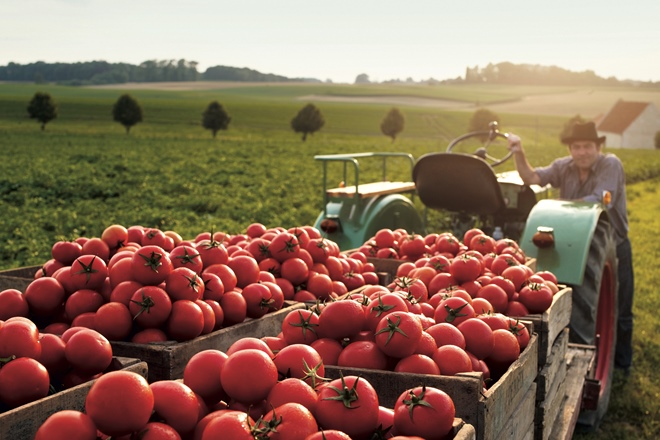 Mutti: Italy's favourite tomatoes