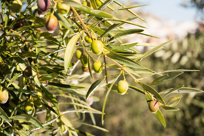 8 things you need to know about extra virgin olive oil
